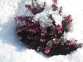 Lebenswertes chemnitz winter winterheide im schnee natur.jpg