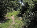 Lesom - panoramio.jpg