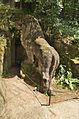 Lev před jeskyní Blanických rytířů, Kunštát, okres Blansko.jpg
