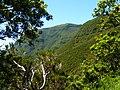 Levada do Risco, Madeira, Portugal, June-July 2011 - panoramio (26).jpg