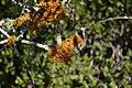 Lichen (5).jpg