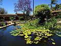 Lilly flowers lotus pond.jpg