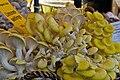 Limonenseitlinge (Pleurotus citrinopileatus) - 20100919-01.jpg