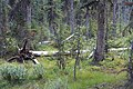 Little Yoho Valley IMG 4887.JPG