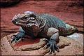 Little dragon (4661256718).jpg
