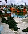 Lobos marinos en el puerto de Mar del Plata.jpg