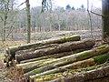 Log stack, Amberwood Inclosure - geograph.org.uk - 1169737.jpg