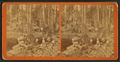 Logging views, including men and women near a giant fallen tree, by T. L. Rea.png