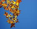 Look up! (2938856829).jpg