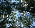 Looking Up - Bee Rock Campground.jpg