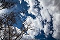 Looking up at the sky from Montezuma Castle in Arizona.jpg