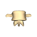 Lumber vertebra 2 close-up anterior surface.png