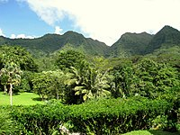 Lyon Arboretum, Oahu, Hawaii - general view.jpg
