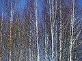 Lyovintsy, Kirovskaya oblast', Russia, 612079 - panoramio (95).jpg