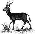 Jagnięta i bluszczowe bąbelki i tryskać pościel