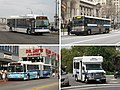 MTA New York City Bus local express BRT paratransit sample.jpg