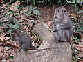 Macaques in Ubud Monkey Forest-mother and child.jpeg