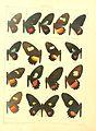 Macrolepidoptera15seit 0017.jpg