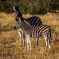 Madikwe Game Reserve, Madikwe, South Africa (Unsplash FRCI2Gg3iyk).jpg