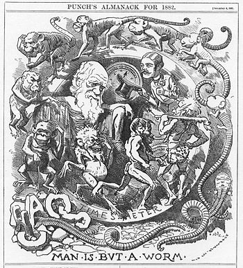 English: Caricature of Darwin's theory in the ...