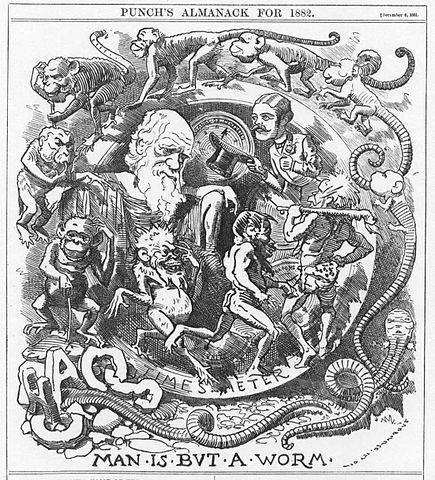 Cartoon Depicting Human Evolution, 1881