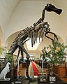 Mandschurosaurus Amurensis..2H1A0328WI.jpg