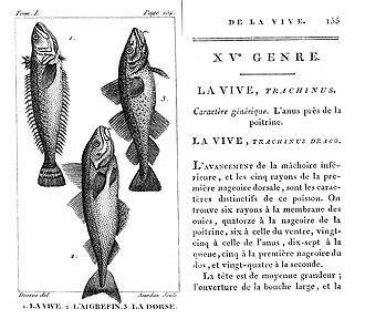 Marcus Elieser Bloch - French edition of Bloch's work, Histoire naturelle des poissons. (1801)