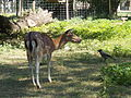 Margaret Island Wildlife Park. - Margaret Island, Budapest, Hungary.JPG