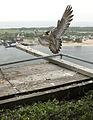 Marine Parkway Bridge Chicks (14276591386).jpg