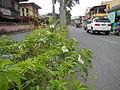 MataasnaKahoy,Batangasjf0336 02.JPG