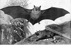 משחקי עטלפים