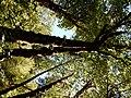 McKenzie River (23172633292).jpg