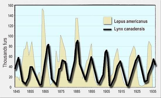 Lotka–Volterra equations - Wikipedia