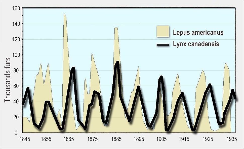 Milliers fourrures vendues en environ 90 ans odum 1953 en