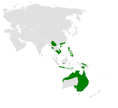Mirafra javanica distribution map.png