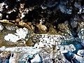 Momias de 3000 años en las inmediaciones del Salar de Uyuni Territorio Llica 17.jpg