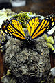 Monarch Butterfly Taxidermy 01.jpg