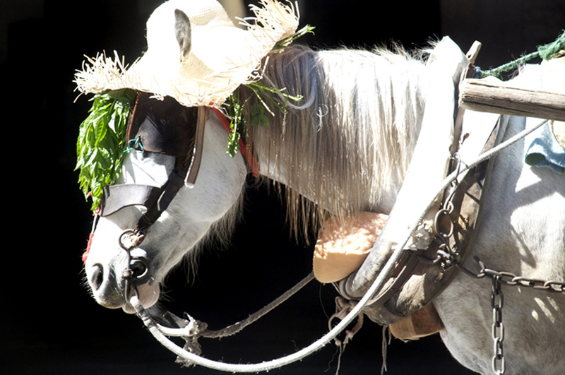File:Montevideo Recycle Horse.png