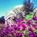 Monticello Summer.jpg