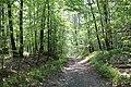 Mountain Road (Johnstown Highway) - panoramio (33).jpg