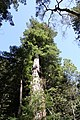 Muir Woods National Monument 2010 15.JPG