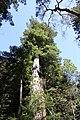Muir Woods National Monument 2010 15.JPG