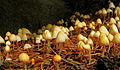 Mushroom colony (5016870748).jpg