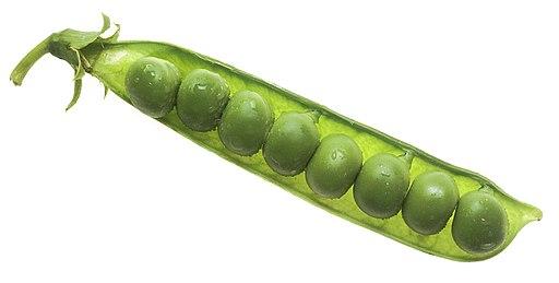 NCI peas in pod