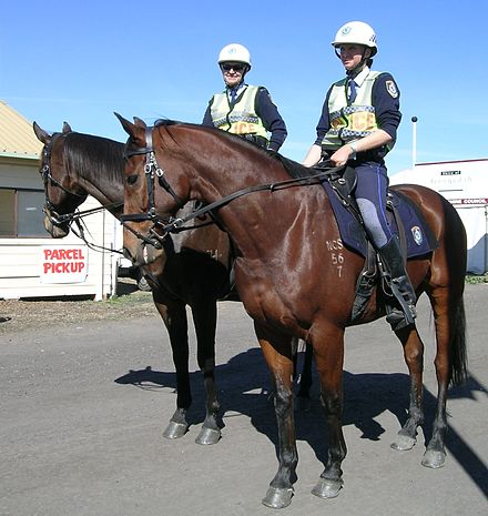 NSW Mounted Police officers on duty at AgQuip, Gunnedah. NSW Mount Police.JPG