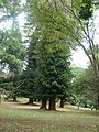 Nairobi Arboretum Park 46.JPG