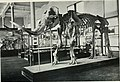 Natural history (1919) (14781442192).jpg