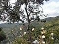 Nature - Natura (14722406703).jpg