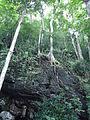Nature of Langkawi (1).JPG