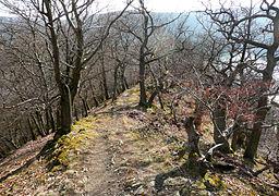 Naturschutzgebiet Hünselburg Edersee Urwaldsteig März 3.JPG